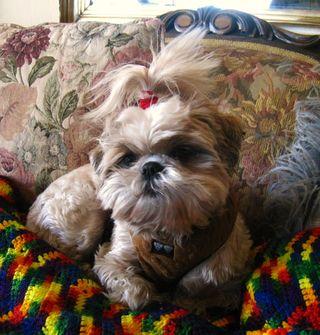 Dog_Buddha_Ecklectika